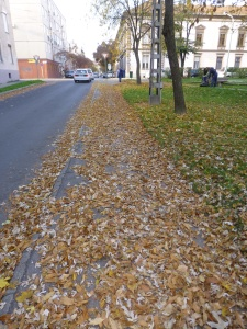 Fallen leaves on our street